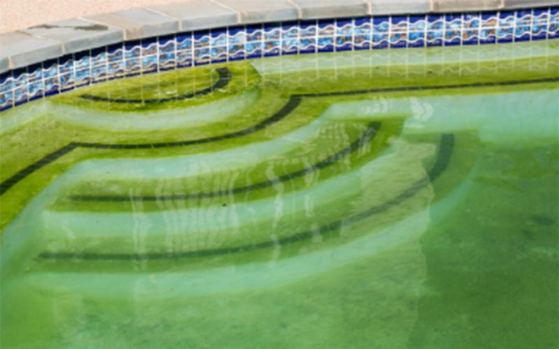 Pool algae treatment and prevention Swimming pool algae treatment